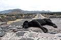 2013-12-23 Teotihuacan Ausblick mit Hund anagoria.JPG