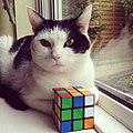 2015-05-24 Rubik s cat cat cube.jpg
