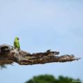 20190605 171940 0000 parrot.png