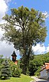 2 Winterlinden in Hohenstein 04 2016-07 NDM KR-077.jpg