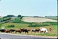 34 - Near border Belarus SSR and Russian SFSR - Minsk - Smolensk - Moscow Highway 1964.jpg