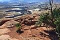 A255, Canyonlands National Park, Utah, USA, Green River overlook, 2008.JPG