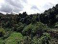 ARBOLES DE AGUACATES - panoramio.jpg