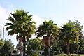 AT&T Trees (2439196244).jpg