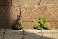 A cat captured in OU college of arts.jpg