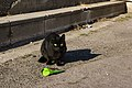 A feral cat in Marseille.jpg