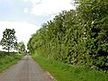 A fine hedge - geograph.org.uk - 801466.jpg