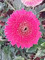 A flower of pink.jpg