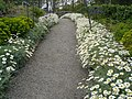 A flowery path at Lissadell - geograph.org.uk - 811023.jpg
