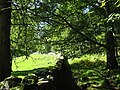 A forest walk through the National Trust owned woodlands above Dolmelynllyn Hotel - geograph.org.uk - 533885.jpg