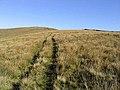 A grass track on Stibbiegill Knowe - geograph.org.uk - 571790.jpg