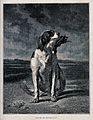 A hunting dog sitting with a game bird in its mouth. Wood en Wellcome V0021840.jpg