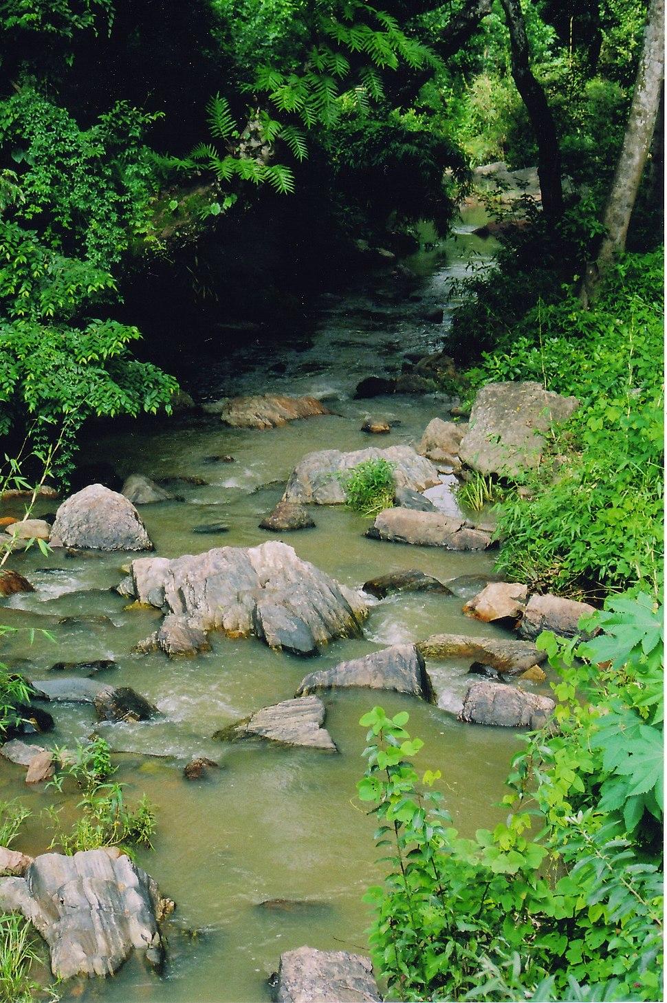 A mountain stream near Sringeri, Karnataka