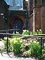 A nárciszok még mindig virágoznak (Daffodils are still flowering) - panoramio.jpg