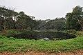 Acharya Jagadish Chandra Bose Indian Botanic Garden - Howrah 2011-02-20 1552.JPG