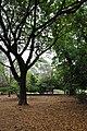 Acharya Jagadish Chandra Bose Indian Botanic Garden - Howrah 2011-02-20 1574.JPG