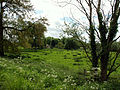 Across meadow to Washdyke Lane, Belton (nr Grantham) - 01.jpg