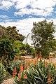 Adelaide (AU), Botanic Garden -- 2019 -- 0663.jpg