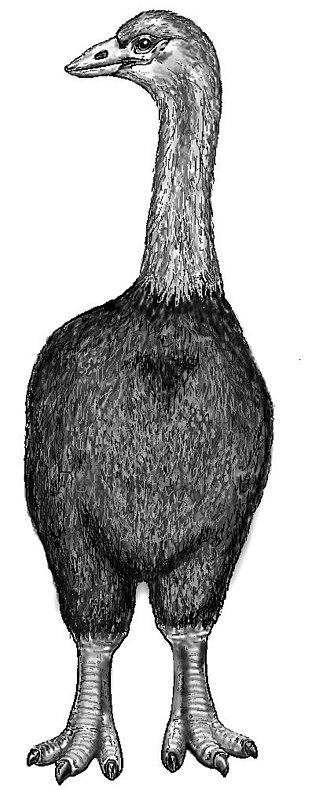 Elephant bird - Aepyornis maximus restoration