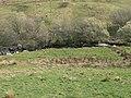 Afon Groes - geograph.org.uk - 401773.jpg