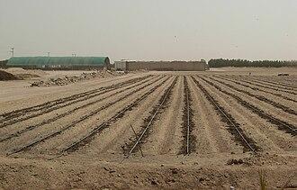 Wafra - Image: Agriculture Desert
