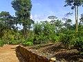 Ahangama, Sri Lanka - panoramio (7).jpg