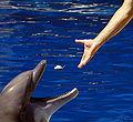 Alimentando a delfin.jpg