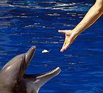 Alimentando a delfin