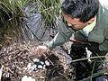 Alligator Research (2), NPSPhoto (9250306424).jpg