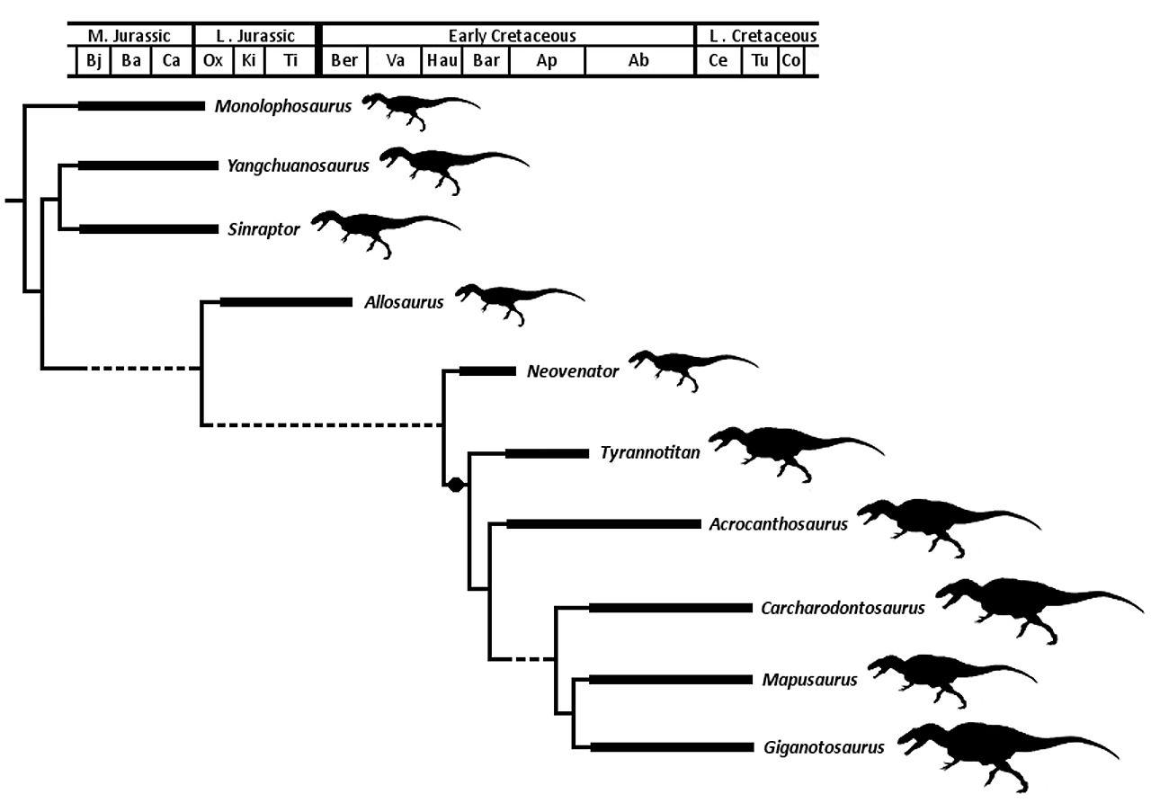 file allosauroidea jpg