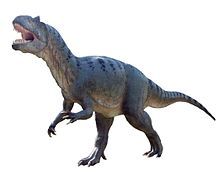 Allosaurus in Baltow 20060916 1500 white background.jpg
