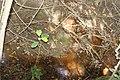 Alto Araguaia - State of Mato Grosso, Brazil - panoramio (1161).jpg