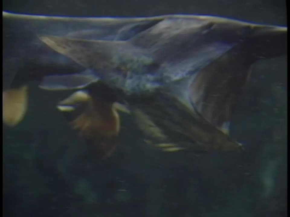 When Will Paddlefish Restaurant Open