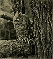 Animal snapshots and how made (1905) (14775184673).jpg