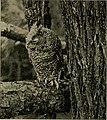 Animal snapshots and how made (1905) (14775184673).jpg
