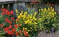 Annettes Garden - geograph.org.uk - 895992.jpg
