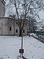 Antal Singer memorial tree, Pestújhelyi Square, 2018 Pestújhely.jpg
