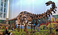 Apatosaurus-louisae-Wikipedia-1.jpg