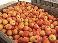 Apples! (4980730811).jpg