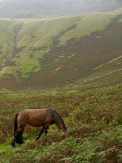 Approach to Cautley Spout, Yorkshire Dales.jpg