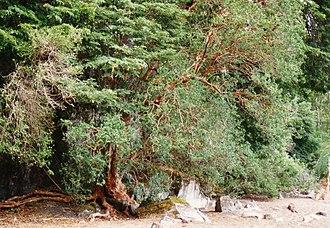 Nahuel Huapi National Park - Patagonian flora