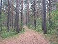 Asinovsky District, Tomsk Oblast, Russia - panoramio (212).jpg