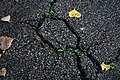 Asphalt Cracks (42291397720).jpg