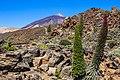 At Tenerife 2019 338.jpg