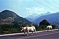 Auf dem Weg nach Laruns 1985 (PIVF1215).jpg