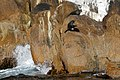 Australian Fur Seals (34470772983).jpg