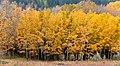 Autumn Calgary Alberta. (8168771277).jpg