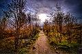Autumn Pathway.jpg
