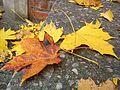 Autumn in Great Poland.jpg