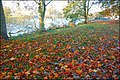 Autumn leaves, Coleraine - geograph.org.uk - 594549.jpg